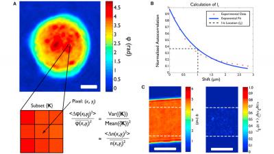 quantitative phase imaging